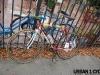 urban1cycle-copy-3-copy